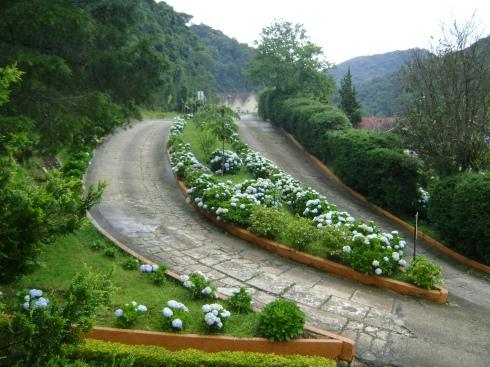 Hortensias típicas de Santo Antônio do Pinhal